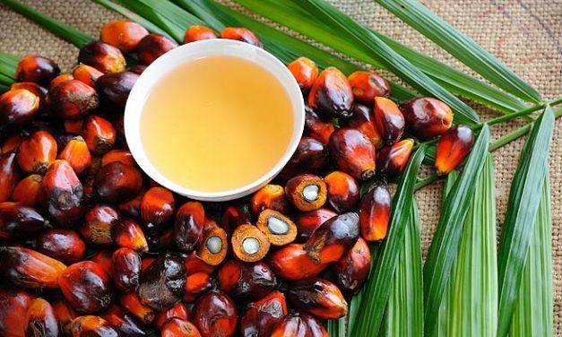 El aceite de palma: ¿Qué sabes y qué no?