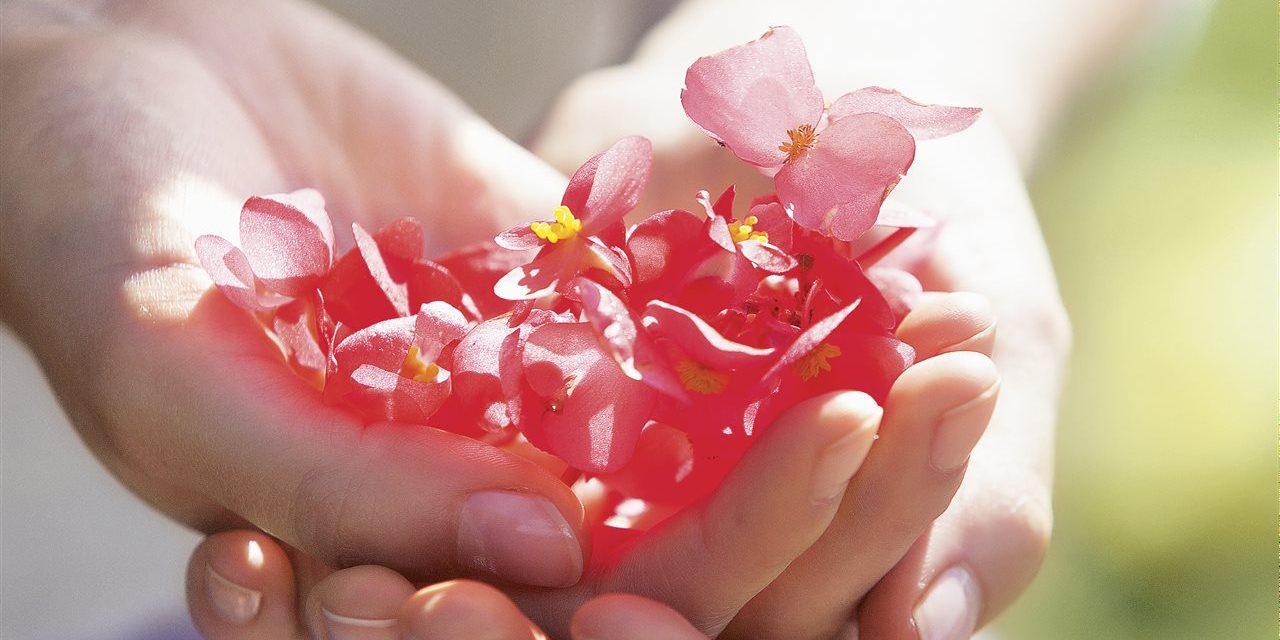 Una alternativa para el cuidado de la piel: la homeopatía
