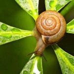Beneficios de los caracoles para la salud