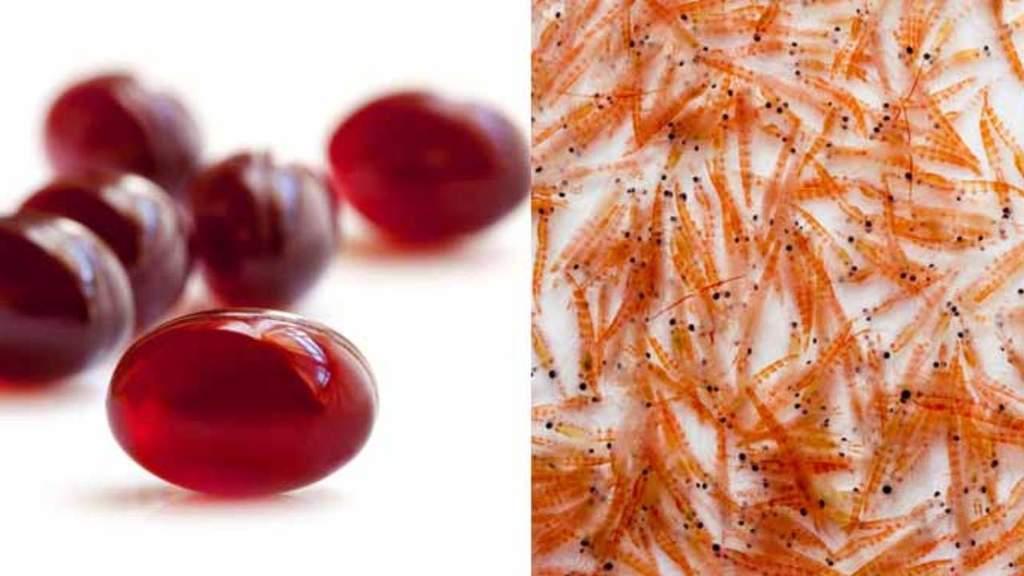 Descubre los beneficios del Aceite de Krill