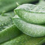 Lo que el Aloe Vera puede hacer por tu piel