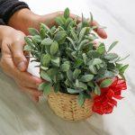 Regalar plantas, una buena opción para casi cualquier ocasión